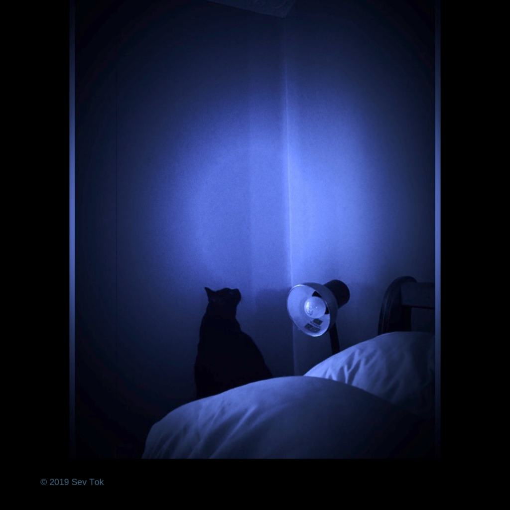 2019 - For days, Comet was meow- chirping at something in my bedroom. She would walk to the wall and stare up at the corner. She even pawed at it.  One morning, I decided to take a picture.